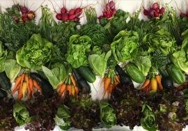 week 5 veggie crate